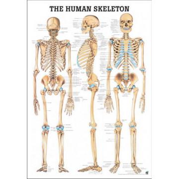 Mapa do Esqueleto